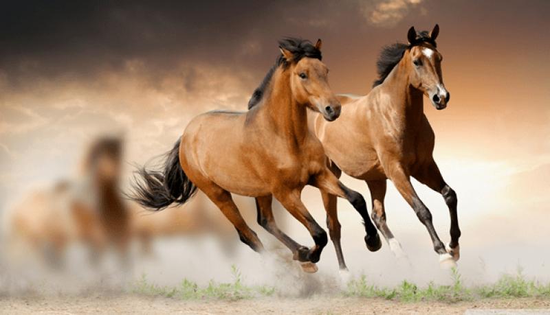 O ano novo chegou e com ele você pode definir metas para você e seu cavalo