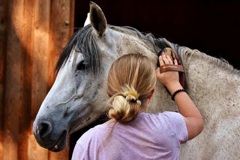 Cuidados básico com o seu cavalo