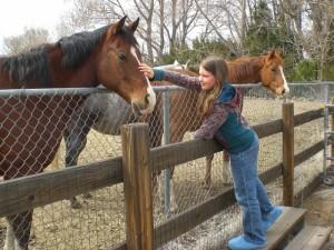 A curiosidade dos cavalos